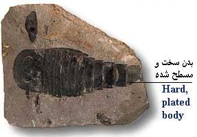 img/daneshnameh_up/0/03/Fossil_aghrab.jpg