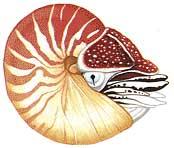 فسیل ( Fossil )......