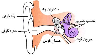 فرق بیماری اسم از سیستیک فیبروز ر به رده الله on Instagram