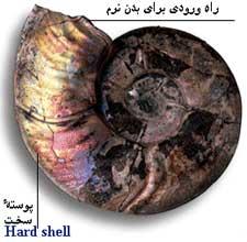 فسیل ( Fossil ).....