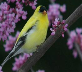 [عکس: bird4.JPG]