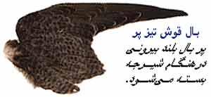 img/daneshnameh_up/9/9e/Birds_balha2.jpg