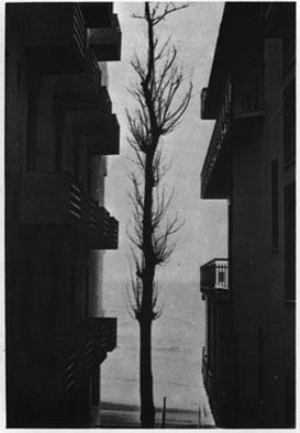 : تضاد خطها در عکاسی
