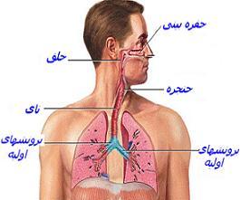 [تصویر:  respirationsystem2.JPG]